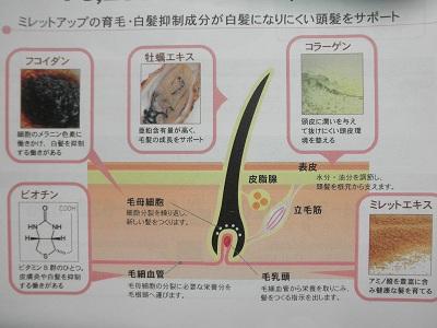 ミレットアップの育毛と白髪抑制の成分が効く図