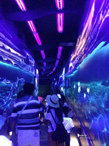 博多の水族館のナイトショー