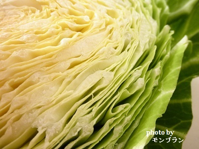らでぃっしゅぼーや旬の野菜セット ぱれっとのキャベツ