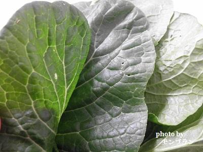 らでぃっしゅぼーや旬の野菜セット ぱれっとの小松菜