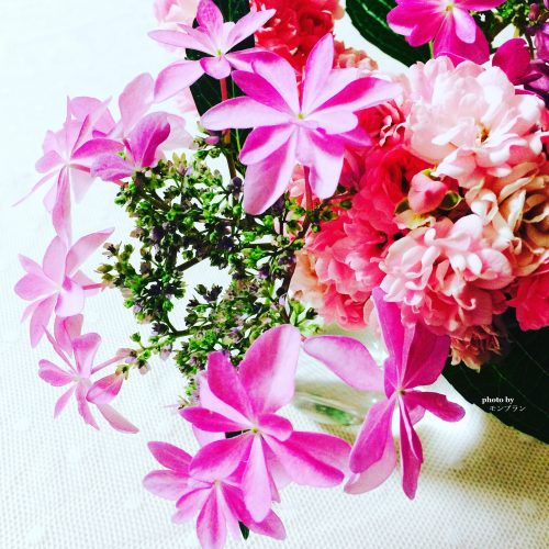 ミニバラと紫陽花