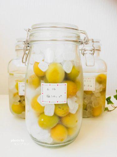 冷凍目で作る梅シロップの作り方