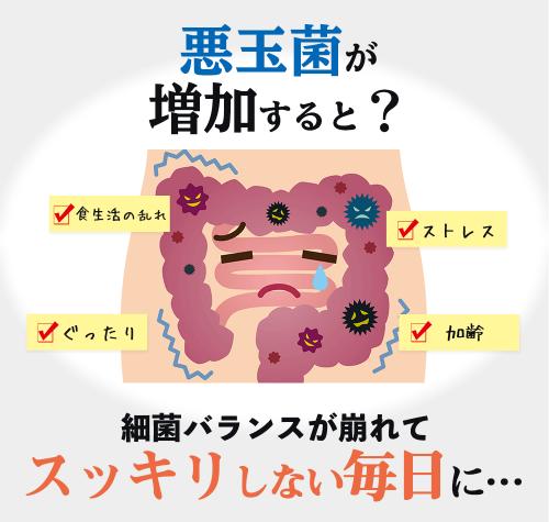 悪玉菌が増えた腸内の様子