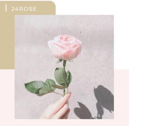 食べられる薔薇ローズラボの24
