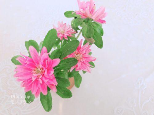 ブルーミーライフのお花のもち具合