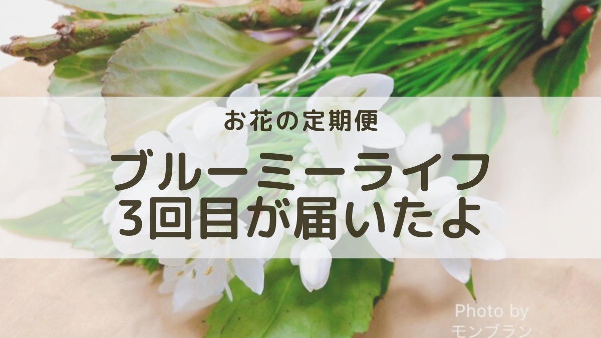 お花の定期便ブルーミーライフ500円の体験プラン3回目のお花口コミレビュー