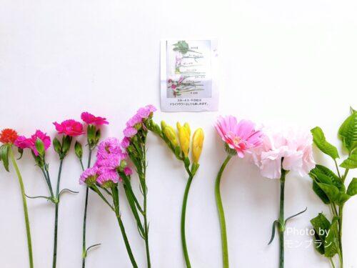 ブルーミー800円プラン今週のお花の名前
