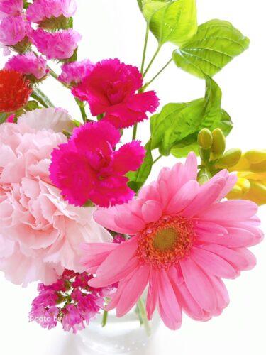 春らしいブルーミー800円プラン今週のお花
