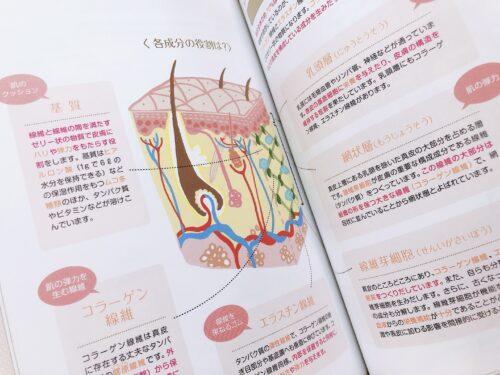 日本化粧品検定2級の教科書内容